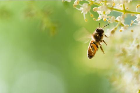 蜂(ハチ)が出てくる夢の意味8選(シチュエーション別)